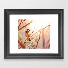 Morning sparrow Framed Art Print