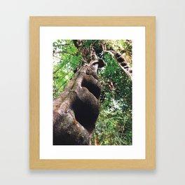 Nature's Wonder Framed Art Print