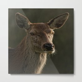 Portrait Of A Wild Red Deer Metal Print
