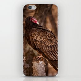 Turkey Vulture In Birch Tree iPhone Skin