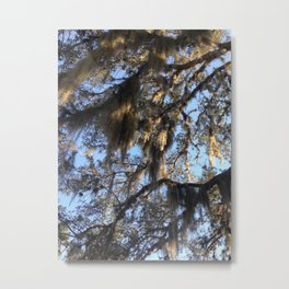 Spanish Moss by Nancy Sack Metal Print