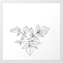 forest branch Art Print