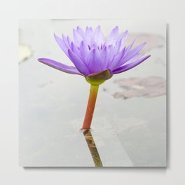 Blue Lotus Reflection Metal Print