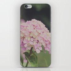 Hortensias iPhone & iPod Skin