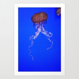 Jellyfish 2 Art Print