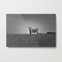 Young Calf Metal Print