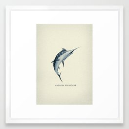 Macaira Nigricans - Blue Marlin Framed Art Print