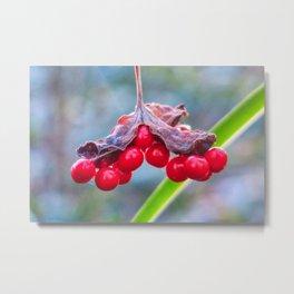 Last of The Winter Berries Metal Print