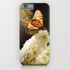 Butterfly Sunshine iPhone 6s Slim Case
