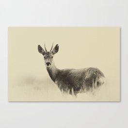 Vintage Roe Deer Canvas Print
