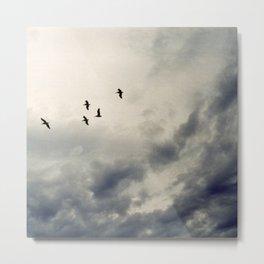 Panama Birds - colour Metal Print