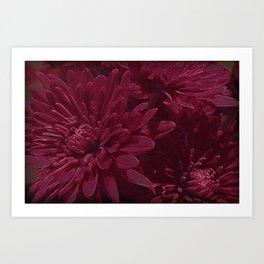 Burgundy Chrysanthemums Art Print