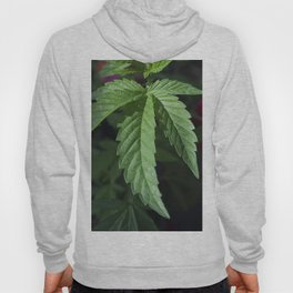 the healing of a nation Hoody