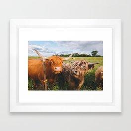 Highland Cows - Blep Framed Art Print