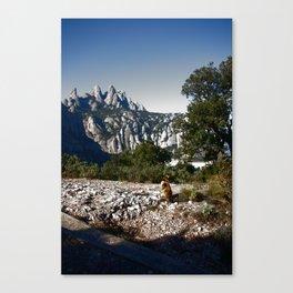 A cat enjoying the view - Montserrat, Spain Canvas Print