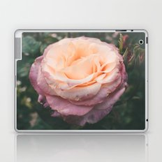 Roses IV Laptop & iPad Skin