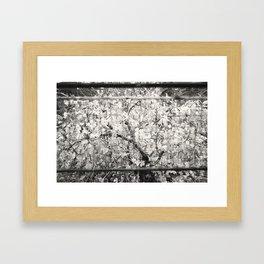 Colourless Tree Framed Art Print