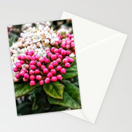 Pink buds on pretty white bush Stationery Cards