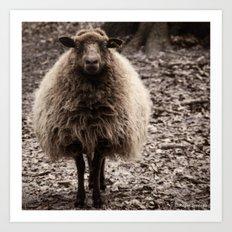 Sheep Stare Art Print