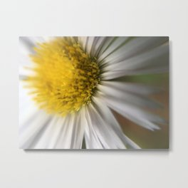 Colorado Native Metal Print