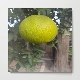 Ripening Fruit Metal Print