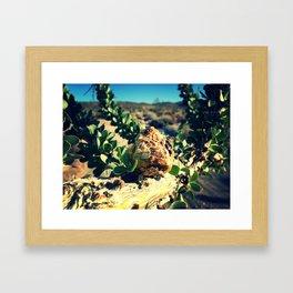 Borrego Springs Framed Art Print