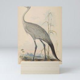 Stanley Crane scops paradisea2 Mini Art Print