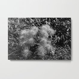 Alpine Fluffy Wildflowers Flowers Metal Print