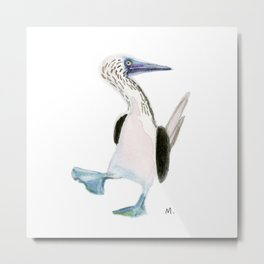 Blue Footed Booby Metal Print