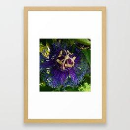 Passion Flower Photo Framed Art Print