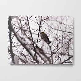Snowy Feathers Metal Print