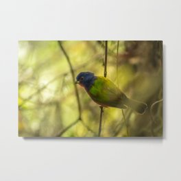 Nonpareil: A Painted Bunting Metal Print