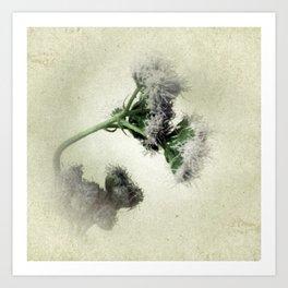 Praxelis Purple Wildflowers Art Print