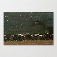 Sheep. Canvas Print