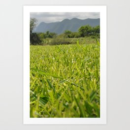 too much grass Art Print
