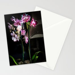 Phalaenopsis Orchid Stationery Cards