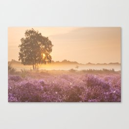 I - Fog over blooming heather near Hilversum, The Netherlands at sunrise Canvas Print