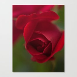 Budding Rose Canvas Print