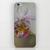 orchid iPhone & iPod Skins featuring Orchid by Mary Kilbreath