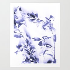 Bay leaves 3 Art Print