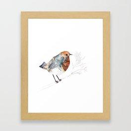 Rockin' Robin Framed Art Print
