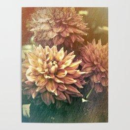 Chrysanthemum Simplicity Poster