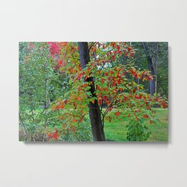 The Wind at My Back Metal Print