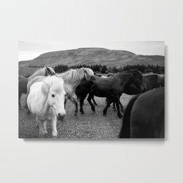 Herd of Horses Metal Print
