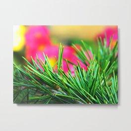 Pine/Fir Tree Metal Print
