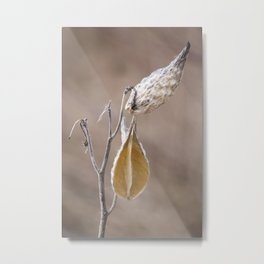 Dried Milkweed Metal Print