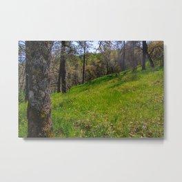 Morgan Hill Metal Print