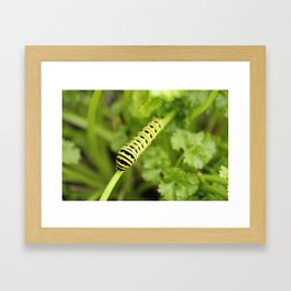 Parsley Caterpillar Framed Art Print