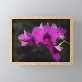 Purple Orchid Framed Mini Art Print