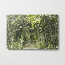 Summer Forest 2 Metal Print